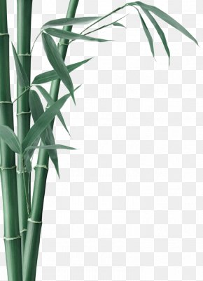 Green And Fresh Bamboo Decorative Patterns - Bamboo Charcoal Activated Carbon Bamboo Textile PNG
