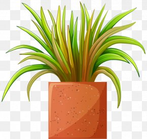 Beautiful Plant Cliparts - Houseplant Flowerpot Bonsai Clip Art PNG