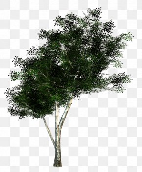 Twigs - The Rider Tree Twig Woody Plant PNG