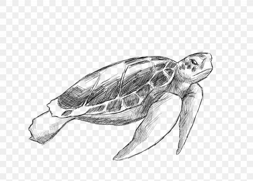 Sea Turtle Drawing Animal Illustration Png 4193x2995px Sea Turtle Animal Artwork Automotive Design Black And White