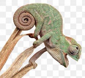 Snake - Reptile Chameleons Snake Pet Veterinary Medicine PNG