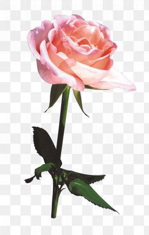 Flower Bouquet,Beautiful Bouquet - Beach Rose Flower Bouquet Gratis PNG