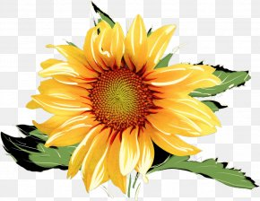 Sunflower Drawing Watercolor Painting - Clip Art Watercolor Painting Image PNG