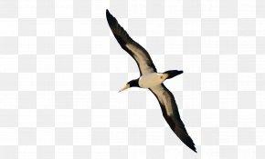 Bird - Bird Flight Clip Art PNG