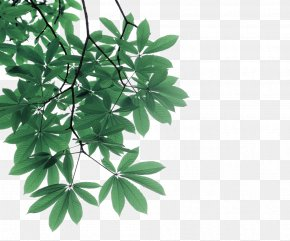 Green Leaves Tree Branches Decorative Pattern - Leaf Branch Photography Tree PNG