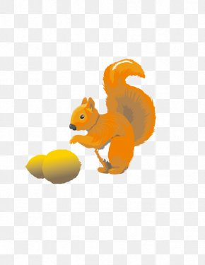 Cute Squirrel - Tree Squirrel Euclidean Vector Pine Squirrel PNG