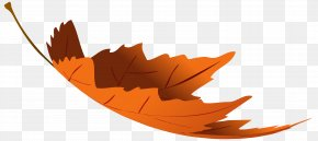 Falling Autumn Leaf Transparent Clip Art Image - Autumn Leaf Color Clip Art PNG