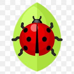 Vector Green Leaves Ladybug - Beetle Ladybird Clip Art PNG