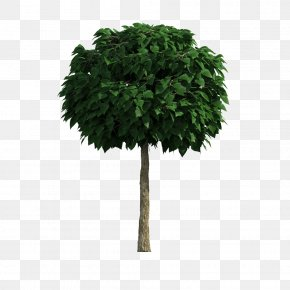 Tree - Tree Download Computer File PNG