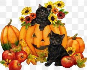 Halloween - Cat Kitten Halloween Clip Art PNG