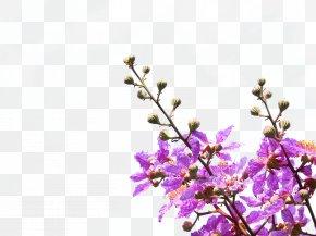 Purple Violet Flowers - Purple Petal Violet Flower PNG
