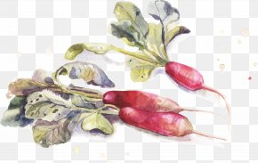 Drawing Carrot - Watercolor Painting Drawing PNG