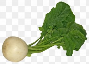 Turnip - Daikon Spring Greens Turnip Vegetable PNG