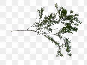 Sketchup - Twig Grasses Plant Stem Leaf Family PNG