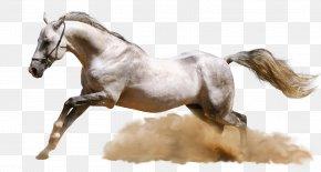 Horse - Horse Desktop Wallpaper Ultra-high-definition Television High-definition Video PNG