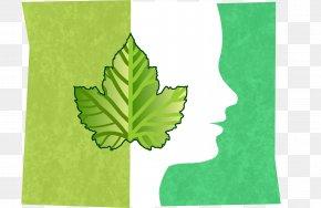 Fresh Leaf - Towel Tree Kitchen Paper Green Leaf PNG