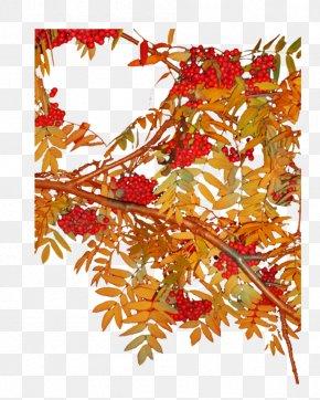Tree - Tree Branch Fruit Leaf PNG