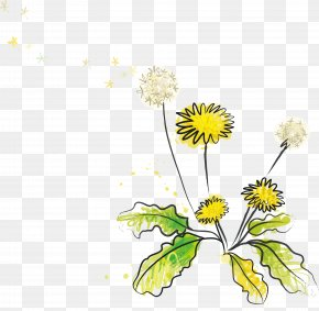 Wildflower Vector Material - Euclidean Vector Dandelion Illustration PNG