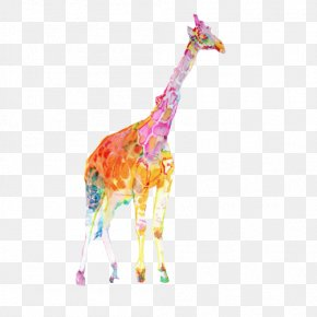 Giraffe Color Clips Picture - Colorful Giraffe Watercolor Painting Illustration PNG