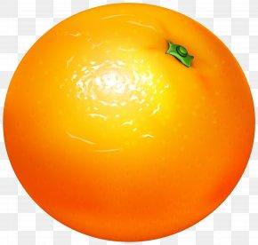 Orange Transparent Clip Art - Orange Vegetarian Cuisine Clip Art PNG