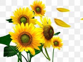 Sunflower - Common Sunflower Petal PNG