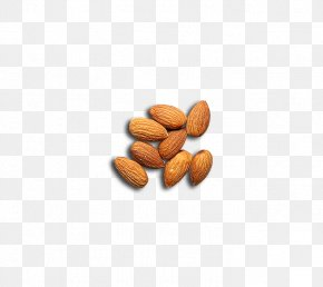 Almond - Nut Almond Apricot Kernel PNG