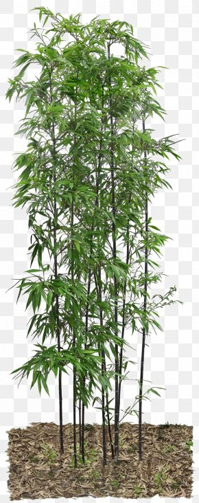 Bamboo Leaves - Bamboo PNG