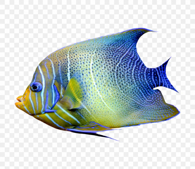Marine Angelfishes Aquarium Tropical Fish Png 959x832px Angelfish Aquarium Aquarium Fish Feed Bonyfish Butterflyfish Download Free