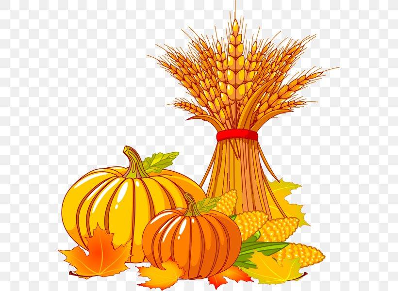 Thanksgiving Autumn Turkey Clip Art, PNG, 581x600px, Thanksgiving, Autumn, Calabaza, Commodity, Cornucopia Download Free