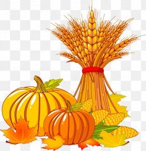 Thanksgiving Pumpkin Clipart - Thanksgiving Autumn Turkey Clip Art PNG