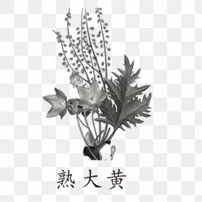 Black And White Herbs - Garden Rhubarb Cooking Herb Traditional Chinese Medicine PNG