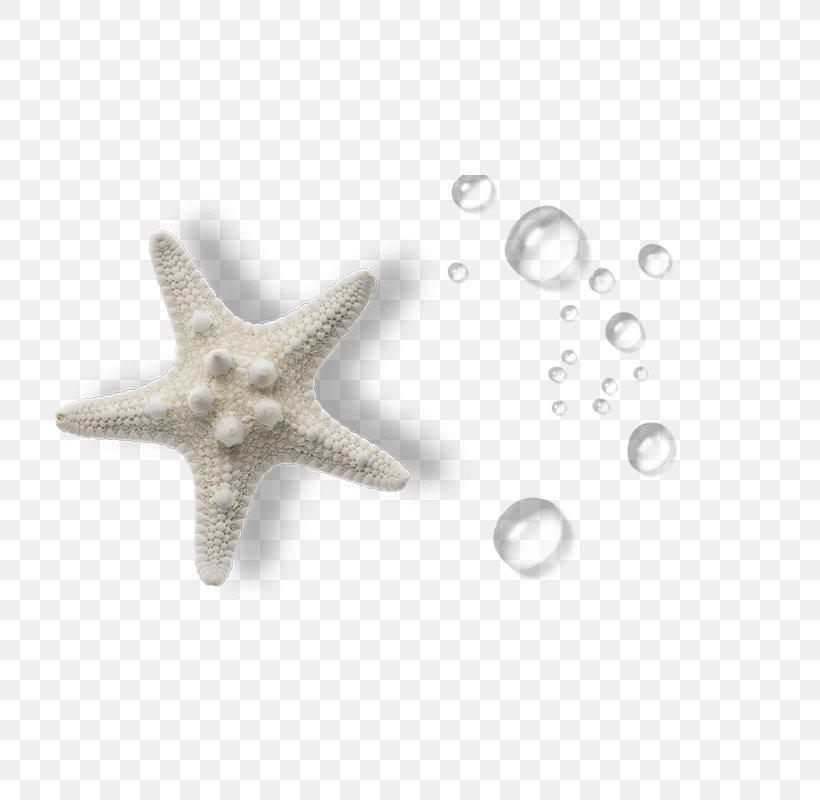 Organism Sea, PNG, 800x800px, Organism, Beige, Biology, Body Jewelry, Echinoderm Download Free