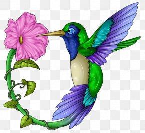 Hummingbird Tattoos Free Download - Hummingbird Beak Wing Feather PNG