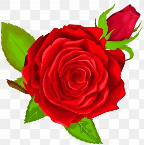 Red Rose Decorative Clip Art Image - Icon Clip Art PNG