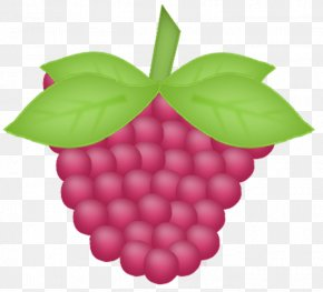 Bunch Of Purple Grapes - Grapevines Purple Google Images PNG
