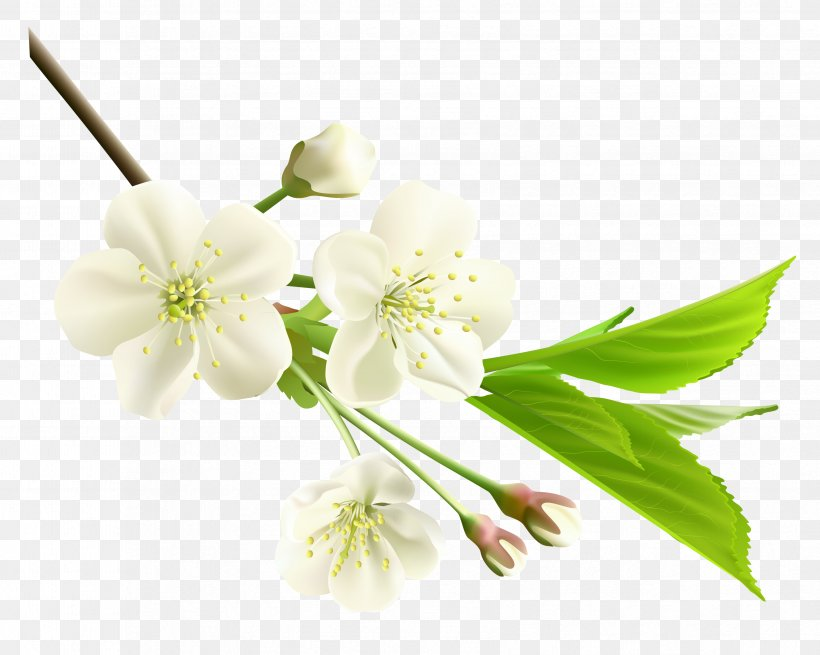 Flower White Clip Art, PNG, 3356x2683px, Flower, Blossom, Branch, Cherry Blossom, Cut Flowers Download Free
