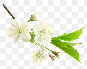 Spring Branch With White Tree Flowers Clipart - Flower White Clip Art PNG