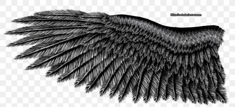 Bald Eagle Bird Eagle Wing Whale & Wildlife Tours, PNG, 900x410px, Bald Eagle, Art, Beak, Bird, Bird Of Prey Download Free