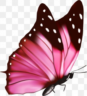 Pink Fresh Butterfly - Pink Flowers Euclidean Vector Photography PNG
