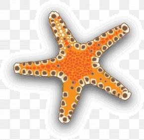 Vector Starfish Seafood - Starfish Euclidean Vector Download Clip Art PNG