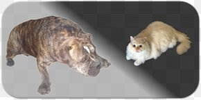 Keep Pets - Whiskers Dog Breed Cat Non-sporting Group PNG