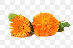 Two Marigold Chrysanthemums - Flower Marigold Chrysanthemum PNG