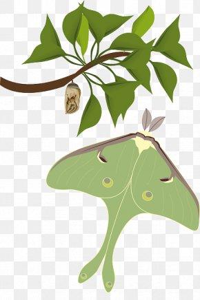 Green Butterflies Moths - Butterfly Insect Luna Moth Atlas Moth PNG