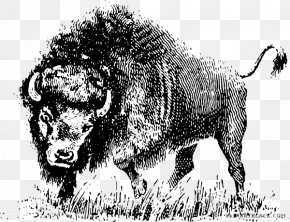 Buffalo Head Black And White - American Bison Clip Art Vector Graphics Openclipart Image PNG