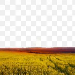 Field Views - Sunset Wheat Landscape PNG