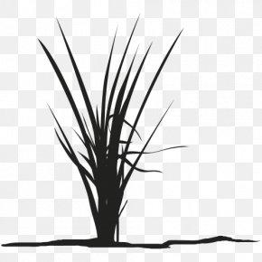 Leaf - Twig Grasses Plant Stem Leaf Silhouette PNG