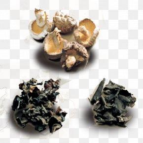 Dried Fungus Dried Mushrooms Creative - Common Mushroom Fungus Shiitake Oyster Mushroom PNG