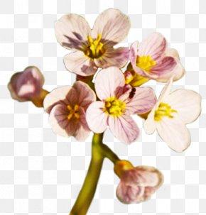 Flower - Flower Spring Clip Art PNG