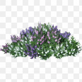 Bushes Image - Shrub Flower Rose Clip Art PNG