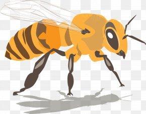 Drink Honey Bees - Western Honey Bee Beehive Beeswax Swarming PNG